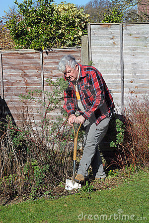 Elderly man digging garden.