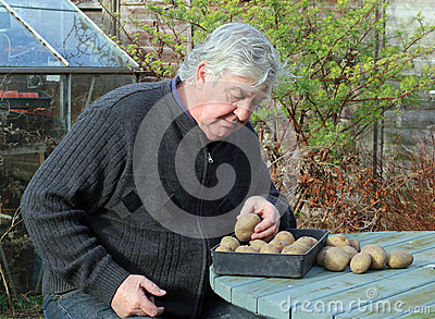 Elderly man with seed potatoes.