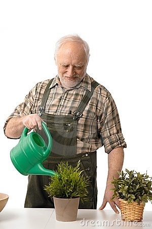 Elderly man watering plants