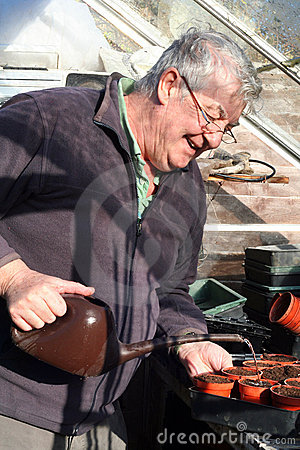 Free Elderly Man Watering Seeds In Greenhouse Royalty Free Stock Photography - 23150647