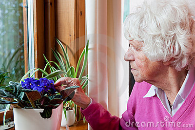 Elderly woman takes care of the flowers