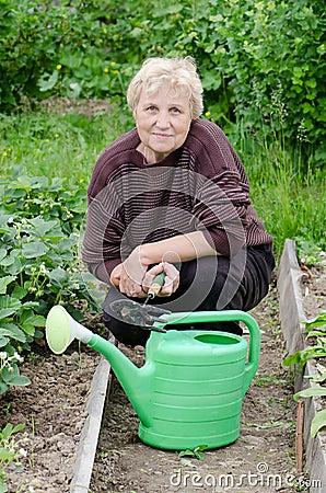 Free Elderly Woman Works On A Kitchen Garden Royalty Free Stock Photos - 20394118