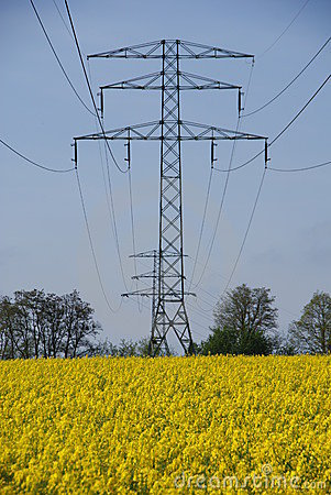 Electricity mast and yellow rape
