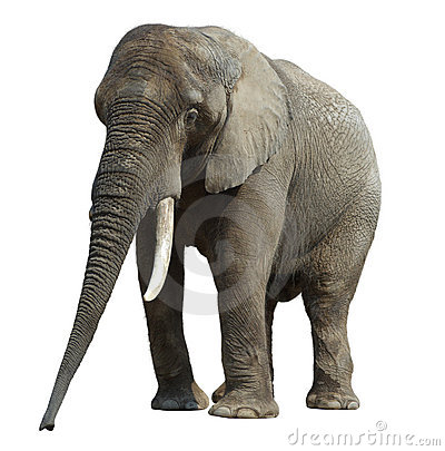 Free Elefant-2 Stock Photo - 8107840