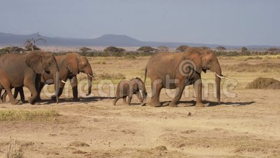 Elefant lager videofilmer