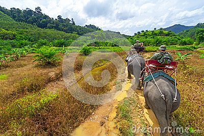 Elefant som trekking i den Khao Sok nationalparken Redaktionell Foto