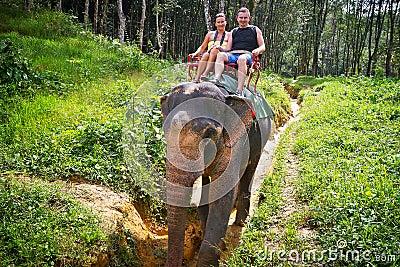 Elefant som trekking i Thailand
