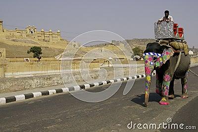 Elefante en el camino Imagen editorial