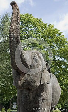 Elefante no jardim zoológico