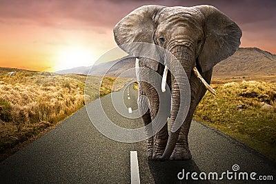 Elefante que recorre en el camino