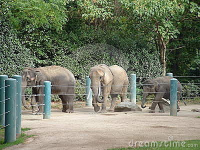 Elefantes en el parque zoológico