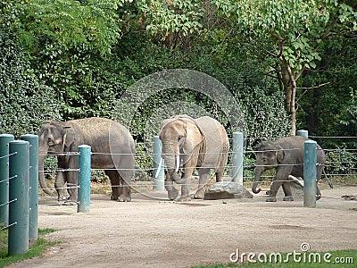 Elefantes no jardim zoológico