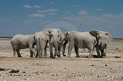 Elefants at the Waterhole