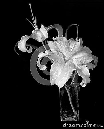 Free Elegance Stock Image - 659991