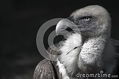 An elegant bird