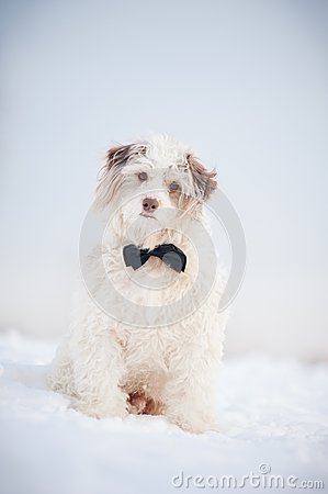 Free Elegant Cute Dog Wearing A Tie Dreaming Stock Photos - 30205063