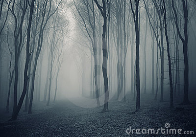 Elegant forest with fog