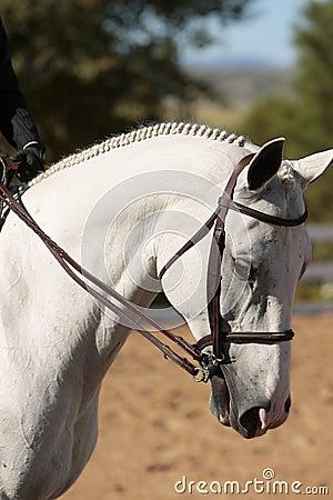 Elegant Horse Head