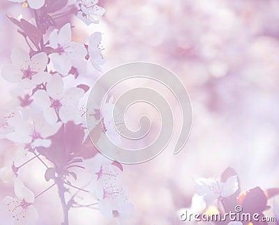 Elegant soft cherry blossom background