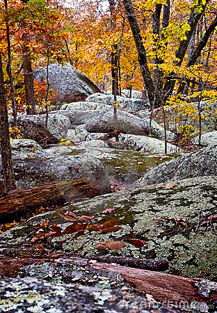 Elelphant Rock Forest
