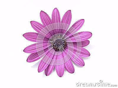 Elementos del diseño: Pista de flor