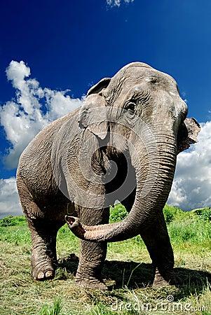 Free Elephant Stock Photography - 14643702