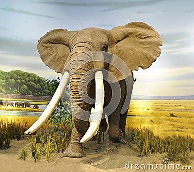 Free Elephant Royalty Free Stock Images - 15765049