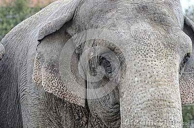 Elephant Royalty Free Stock Images - Image: 27932329