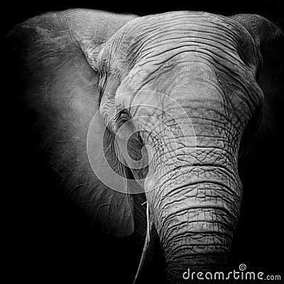 Free Elephant Stock Photo - 55648870
