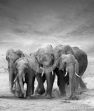 Free Elephant Stock Photos - 59293263