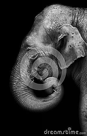Free Elephant Stock Photography - 60251152