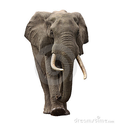 Free Elephant Approaching Isolated Stock Images - 18200044