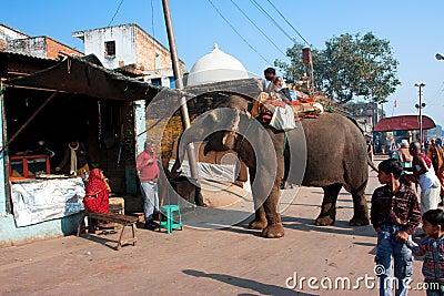 Elephant asks food on the old city street