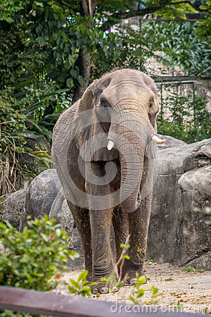 Free Elephant At Taipei Zoo Royalty Free Stock Photography - 41650617