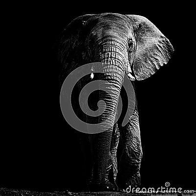 Free Elephant At Waterhole Stock Image - 118721821