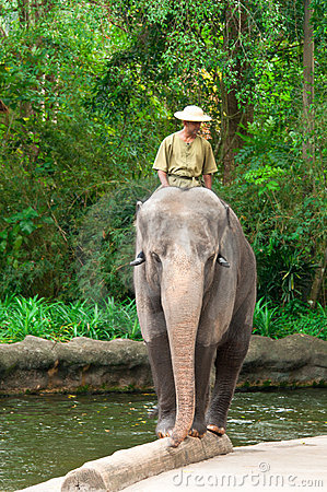 Elephant Balancing on Log Editorial Stock Image