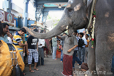Elephant Blessing Devotees in Ganesha Temple Editorial Photo