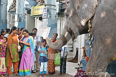 Elephant blessing people in India Editorial Image