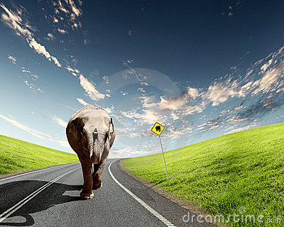 Elephant Bull in walking on a road