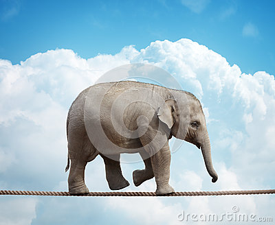 Elephant calf on tightrope