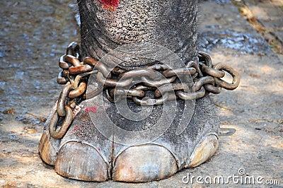 Elephant Chain Stock Image Image 14566181