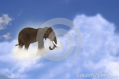 Elephant on cloud