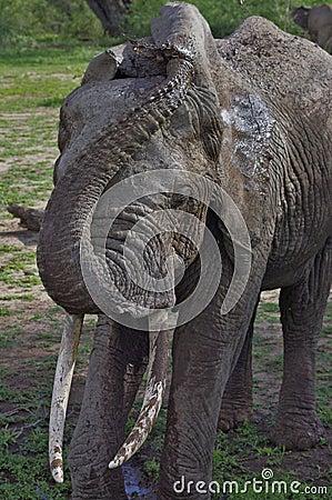 Free Elephant Cooling Off In Lake Manyara, Tanzania Royalty Free Stock Images - 19207599