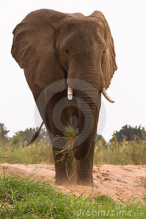 Free Elephant Eating Stock Images - 18386134