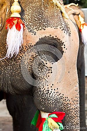 Elephant face close up