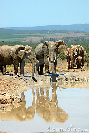 Free Elephant Family Stock Images - 1214384