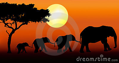 Elephant family walking