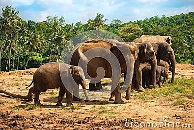 Elephant family walking towards a water