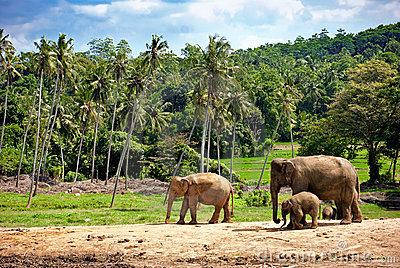 Elephant family walking towards a water hole