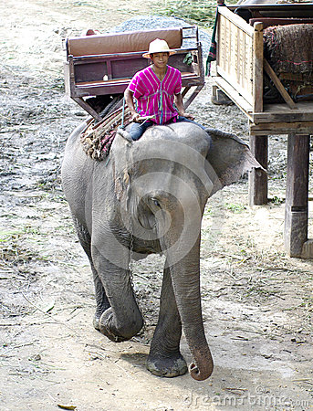 Elephant farm in northern thailand Editorial Photo
